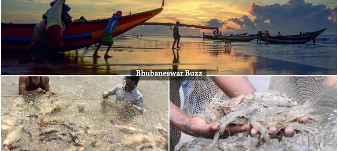 Odisha aims at Rs 20,000 cr annual seafood exports in 5 years, exported worth Rs 2100 crore in 2016-17