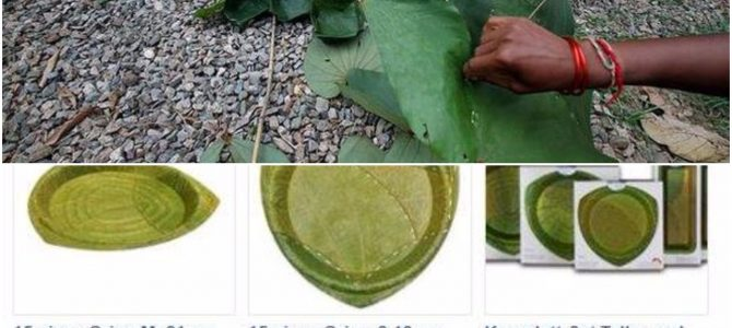 Ranchi Startup gets order of 3,00,000 leaf plates per month from France, ties up with Odisha villagers