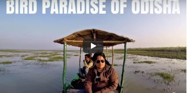 Mangalajodi – The Bird Paradise of Odisha | A Must for All Bird Lovers !!