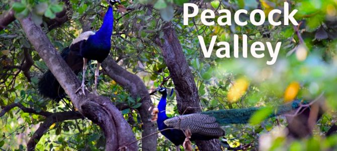 Kalinga Diaries on a scenic tour of Cuttack's Prachi valley
