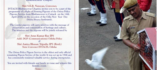 Did you know Odisha Police Pigeon Service is the only official remaining Pigeon Service of the world? Come see it on Odia New year