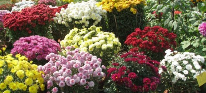 Two day State Level Annual Flower Show 2019 starts today in premise of Botanic Garden of RPRC Bhubaneswar